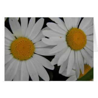 Kort för anpassade för blom för vitdaisy oavkortat