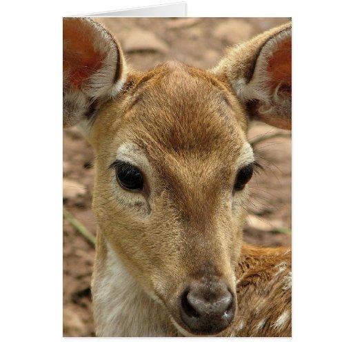 Kort för Bambi hjorthälsning