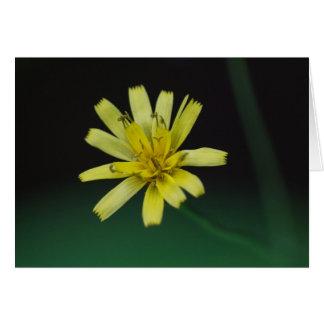 Kort för blommigt för vildblomma för