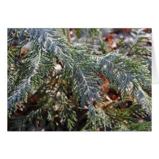 Kort för Cypress frosthälsning