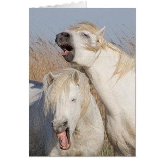 Kort för hälsning för häst för gäspning för två
