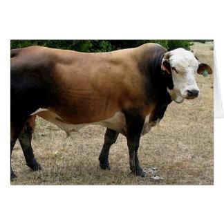 Kort för porträtt för Beefmaster tjurnötkreatur