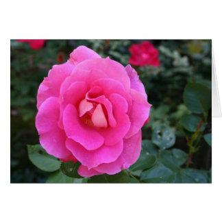Kort för rosablommatack