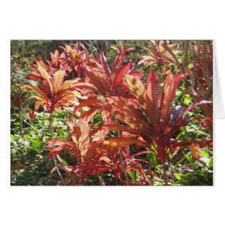 Kort för tackkort för foto för växt för Hawaii