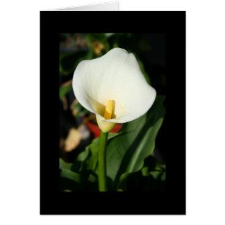 Kortet för hälsningen för den Cala liljablomman Hälsningskort