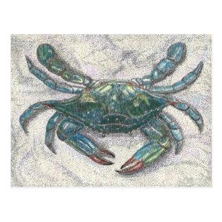 Krabba för Chesapeakefjärdblått Vykort