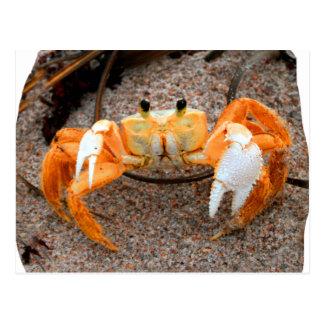 Krabba på den strand colorized orangen på sanden vykort