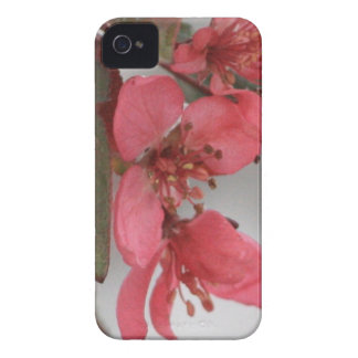 KrabbaApple blommar iPhone 4 Fodraler