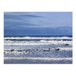 Kraftig vinkar vykort för Stilla hav