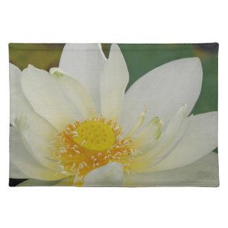 Kräm- vatten Lily02.JPG Bordstablett