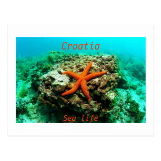 Kroatien - havsliv vykort