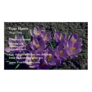 Krokus drottning av deppigheten, (krokus Vernus) Set Av Standard Visitkort