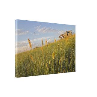 Krönade Wheatgrass och tröska - maskin Canvastryck