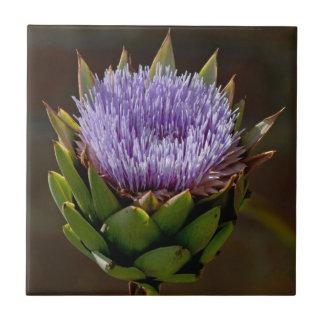 Kronärtskocka Cynara Cardunculus, i flower. Kakelplatta