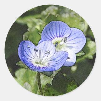 Krypa Speedwell (Veronica-filiformis) blommor Runt Klistermärke