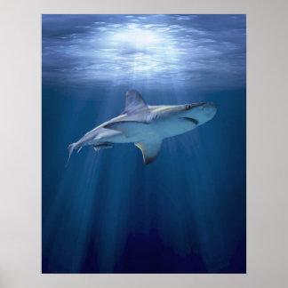Kryssa omkring hajen poster