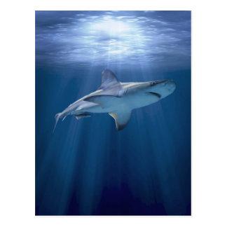 Kryssa omkring hajen vykort
