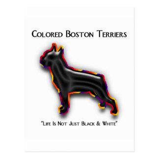 Kulör Boston Terrier Vykort
