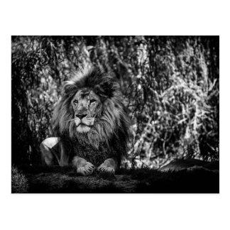 Kung av djungelvykortet vykort
