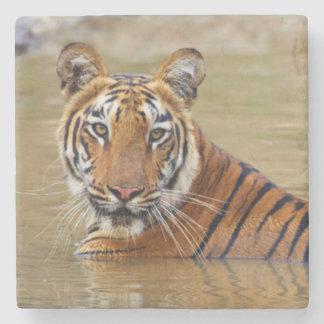 Kunglig Bengal tiger på waterholen Stenunderlägg