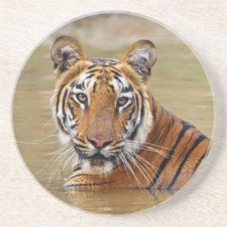 Kunglig Bengal tiger på waterholen Underlägg Sandsten