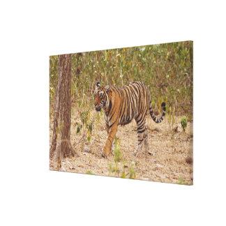 Kunglig Bengal tiger som är röra runt om busken, Canvastryck