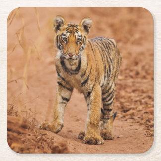 Kunglig Bengal tigerunge på flyttningen Underlägg Papper Kvadrat