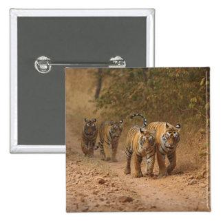 Kungliga Bengal tigrar på flyttningen, Ranthambhor Standard Kanpp Fyrkantig 5.1 Cm
