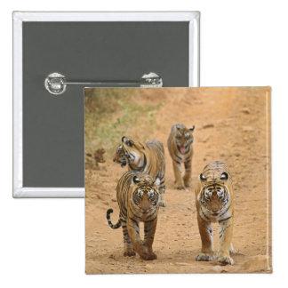Kungliga Bengal tigrar på spåra, Ranthambhor 2 Standard Kanpp Fyrkantig 5.1 Cm