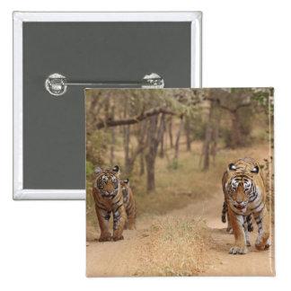 Kungliga Bengal tigrar på spåra, Ranthambhor 3 Standard Kanpp Fyrkantig 5.1 Cm