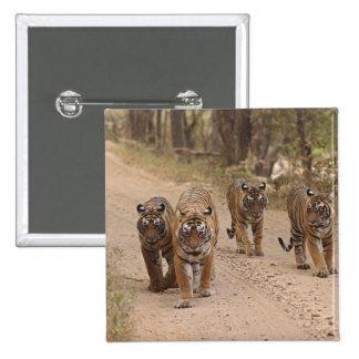 Kungliga Bengal tigrar på spåra, Ranthambhor 5 Standard Kanpp Fyrkantig 5.1 Cm
