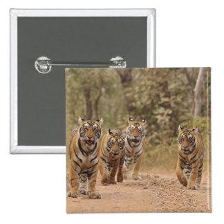 Kungliga Bengal tigrar på spåra, Ranthambhor 6 Standard Kanpp Fyrkantig 5.1 Cm