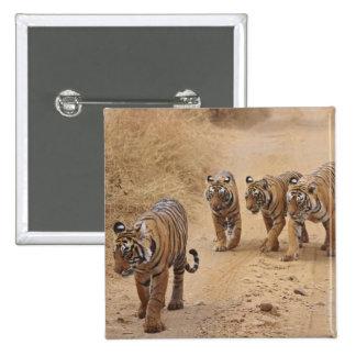 Kungliga Bengal tigrar på spåra, Ranthambhor 8 Standard Kanpp Fyrkantig 5.1 Cm