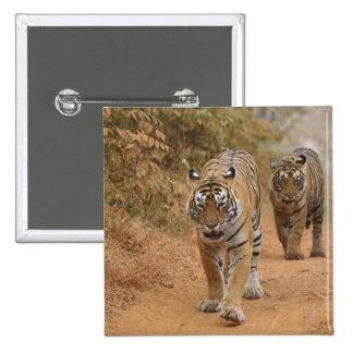 Kungliga Bengal tigrar som går längs spåra, Standard Kanpp Fyrkantig 5.1 Cm