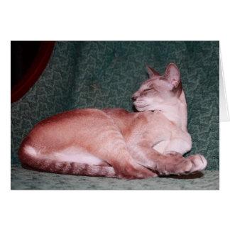 Kungligt kattfödelsedagkort hälsningskort