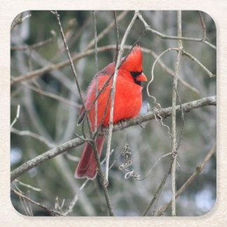 Kungligt rött kardinalpappersunderlägg underlägg papper kvadrat
