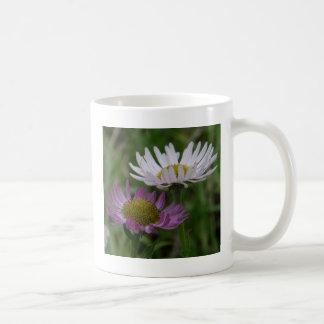 Kust- Fleabane Aster, Erigeronperegrinus Kaffemugg