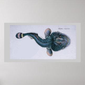 Kust- vintagedragonfish poster