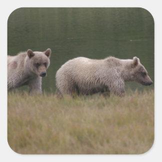 Kvadrerad björn fyrkantigt klistermärke