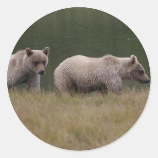 Kvadrerad björn runt klistermärke