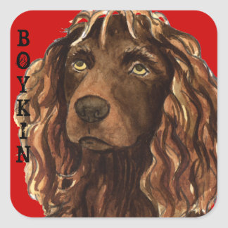 Kvarter för Boykin Spanielfärg Fyrkantigt Klistermärke