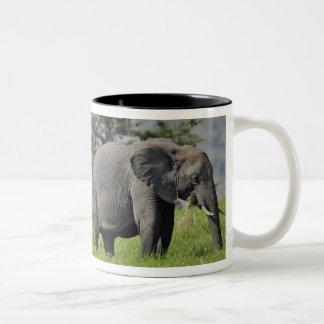 Kvinnlig afrikansk elefant med bebiset, Loxodonta Två-Tonad Mugg
