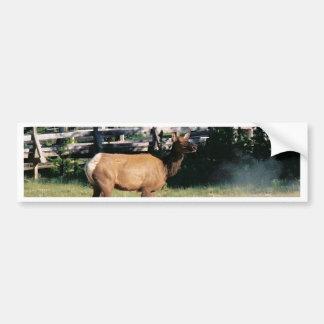 Kvinnlig älg i Yellowstone Bildekal
