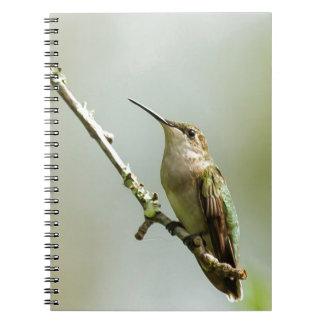 Kvinnlig Ruby-throated Hummingbird Anteckningsbok Med Spiral