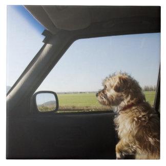 Kvinnlig Terrier X som sitter om framsäte av Kakelplatta
