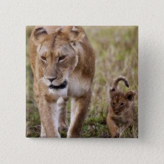 Kvinnligt lejont med ungen (pantheraen Leo) som se Standard Kanpp Fyrkantig 5.1 Cm
