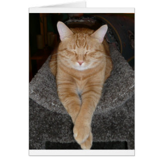 Kylig Kat Hälsningskort