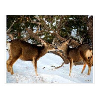 Kyssa för två hjort vykort