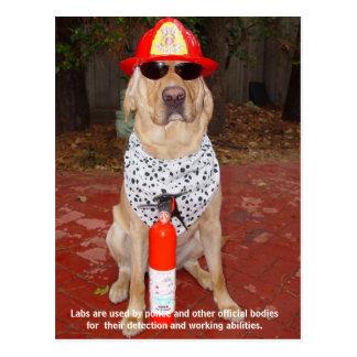 Labbdrag - använda vid polis & brandmän vykort