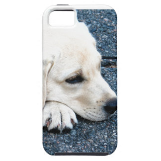 Labrador iPhone 5 Fodral